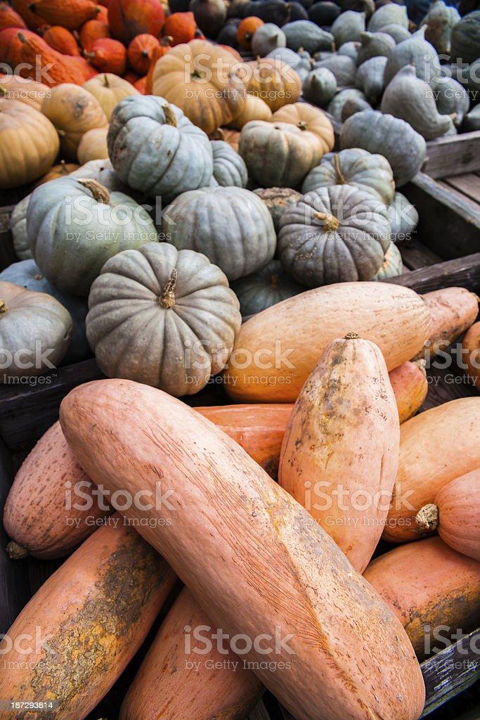 Close-up photograph of pumpkins at county fair royalty-free stock photo