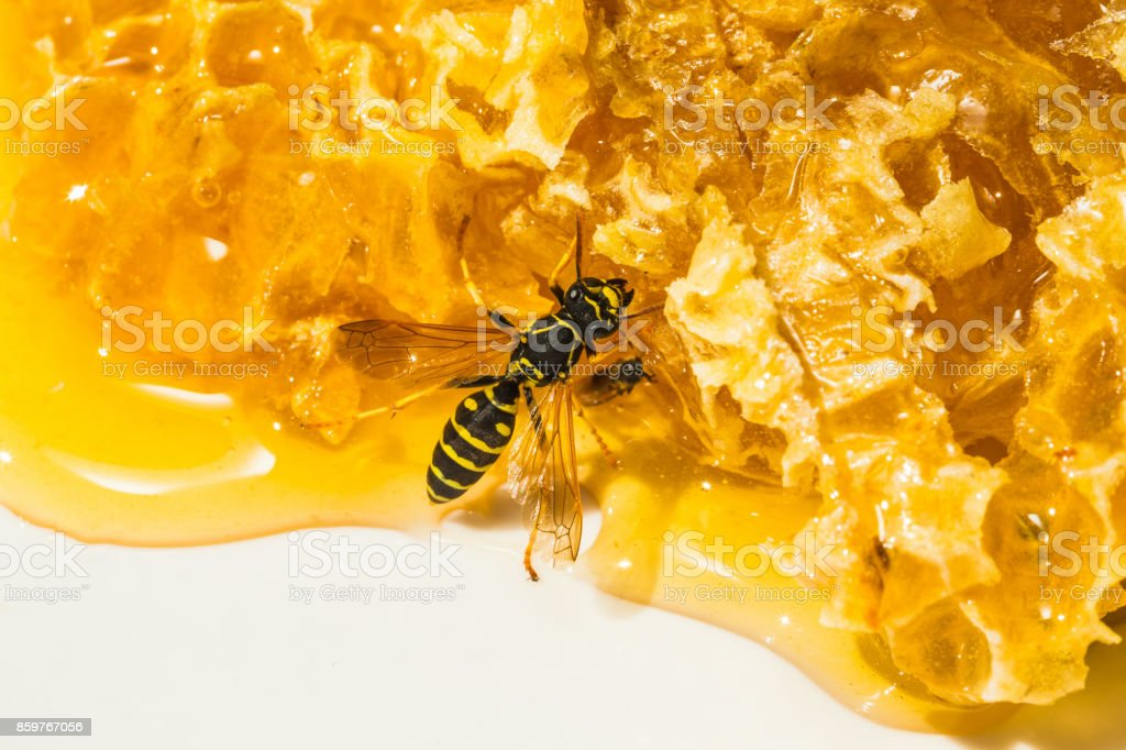 close-up pieces of honeycomb with honey stock photo