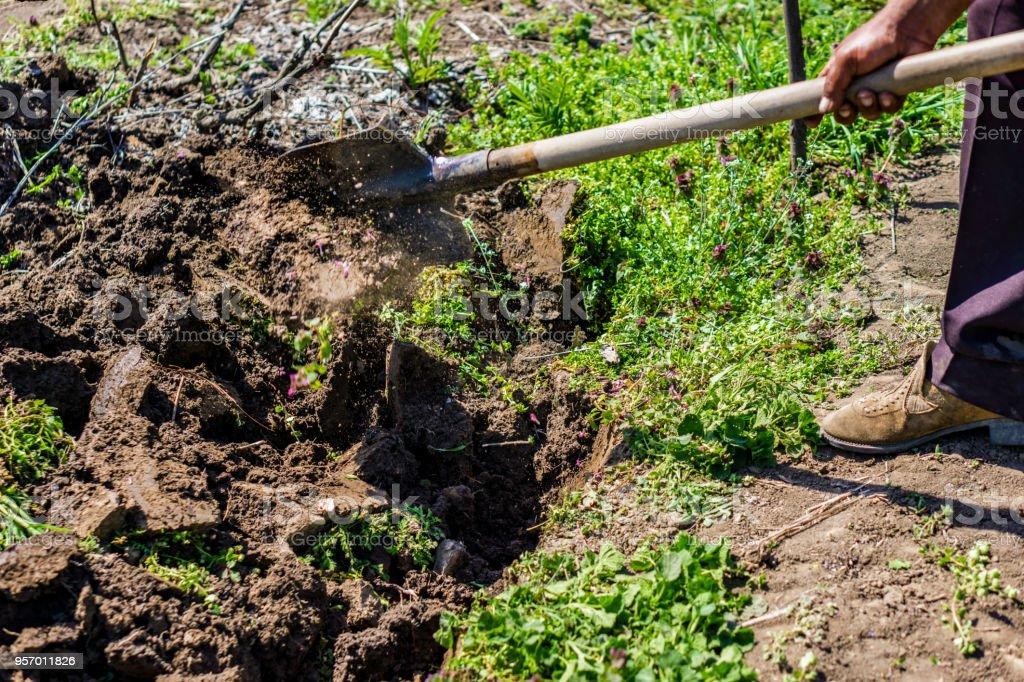 Plano de close-up para a colheita do solo na primavera com a pá. Passando o solo de terra preta com a pá.  Controle de ervas daninhas rural. Concepção de agricultura e Agro-culturas. - foto de acervo