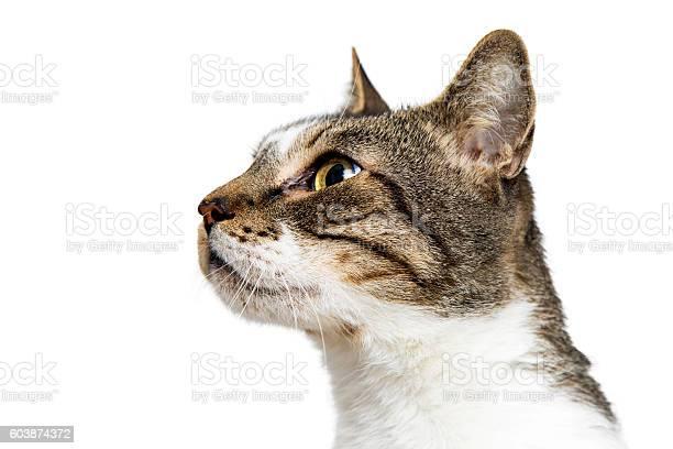 Closeup portrait cat looking side picture id603874372?b=1&k=6&m=603874372&s=612x612&h=0rqagoetbft ucwvawpfresly7s vagv0w ypgweze0=