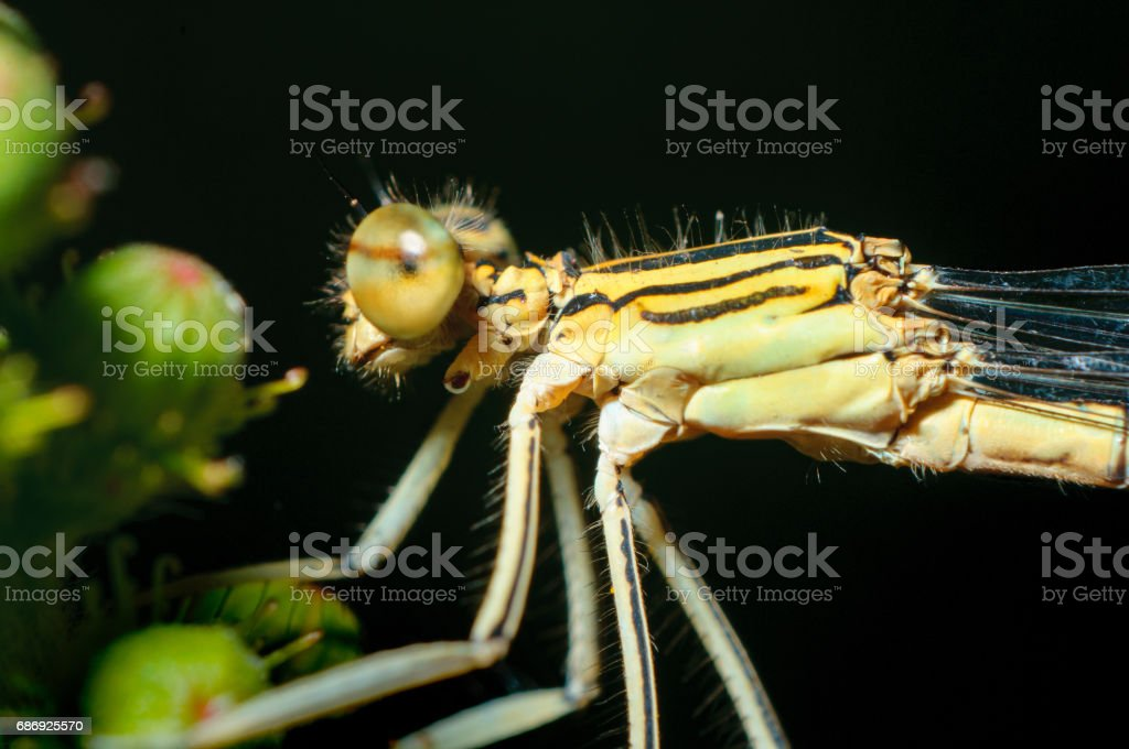 Close-up portrait dragonfly. Eating insect stock photo