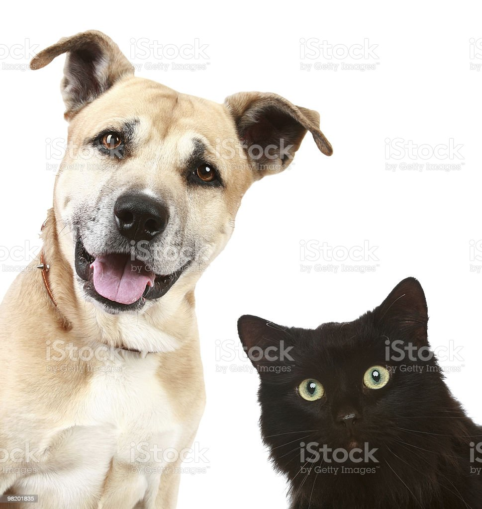 Close-up portrait of a cat and dog royalty-free stock photo