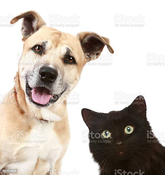 Closeup portrait of a cat and dog picture id98201835?b=1&k=6&m=98201835&s=612x612&h=crvl8kcyooq98h nsgtemjedisvhjvk8lh9rlldrm30=