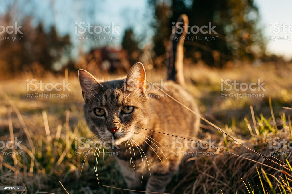 Close-up portrait of a cute cat in sunset stock photo