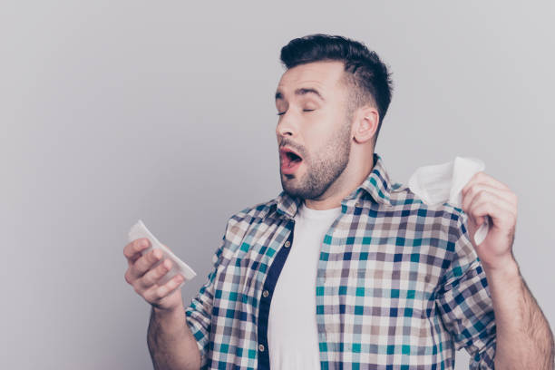 Closeup portrait of attractive man sneezing with open mouth prepared tissues for his runny nose, having a cold standing over grey background stock photo