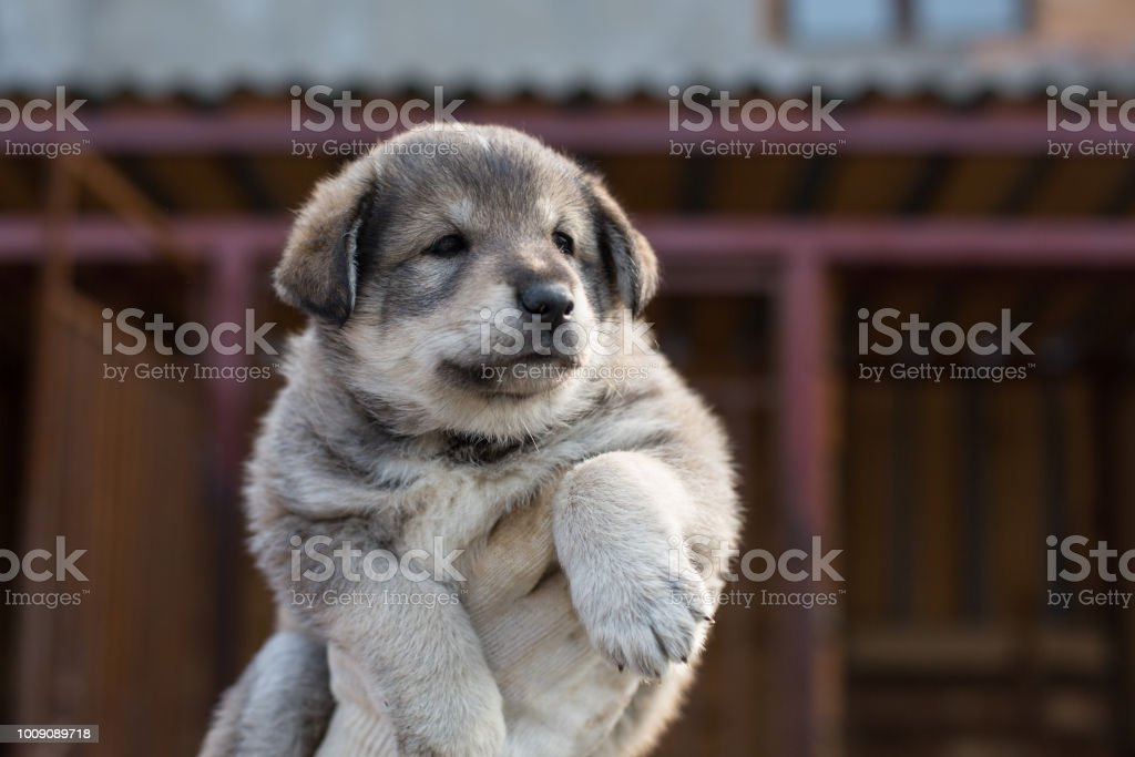 Close-up Portrait of cute Abandoned puppy from a shelter hopes to find its new home. stock photo
