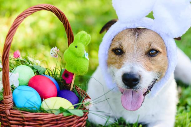 Close-up portret van grappige hond met bunny oren wensen Happy Easter foto