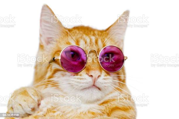 Closeup portrait of funny ginger cat wearing colored glasses picture id947408458?b=1&k=6&m=947408458&s=612x612&h=zb9dnhzqpauffnpa0sulrgz6wzwrlh7qd3i5qugigks=