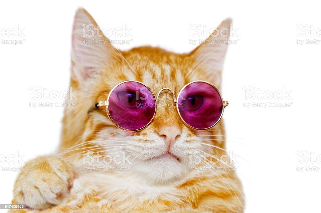 Closeup Portrait von lustige Ingwer Katze mit farbigen Brille – Foto