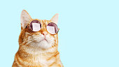 istock Closeup portrait of funny ginger cat wearing sunglasses isolated on light cyan. Copyspace. 1188445864