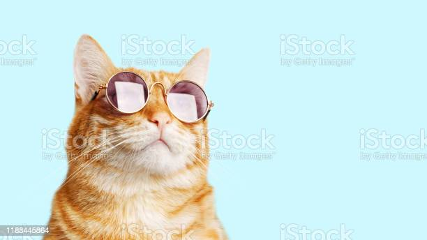 Closeup portrait of funny ginger cat wearing sunglasses isolated on picture id1188445864?b=1&k=6&m=1188445864&s=612x612&h=6oe626tgxp4nsooysu4ej9pmklb88boojrboktdw6xi=