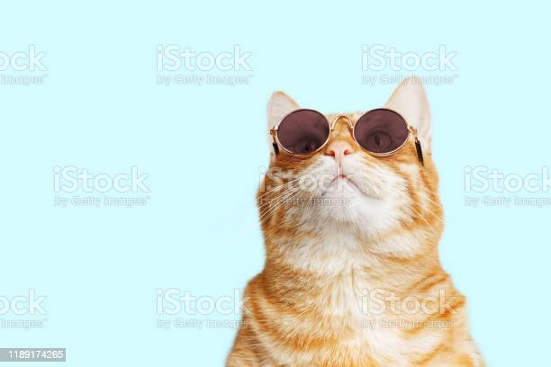 Closeup portrait of funny ginger cat wearing sunglasses isolated on picture id1189174265?b=1&k=6&m=1189174265&s=612x612&h=xzapwf77 0wvmvq gqdbslkneqccjmfyibwgsjnblqc=