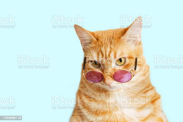 Closeup portrait of funny ginger cat wearing sunglasses isolated on picture id1253696116?b=1&k=6&m=1253696116&s=612x612&h=pi2qieptcisccdzjvscjw1yk7dr8j6jucizmjumxd70=