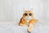 Closeup portrait of funny red cat wearing sunglasses, lying on a bed and looking straight ahead directly into the camera against white blurred background. Shallow focus. Copyspace.