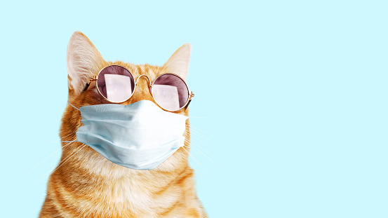 Closeup portrait of ginger cat wearing sunglasses and protective medical mask isolated on light cyan. Copyspace.