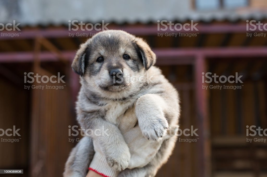 Close-up Portrait of lovely Abandoned puppy from a shelter hopes to find its new home. stock photo