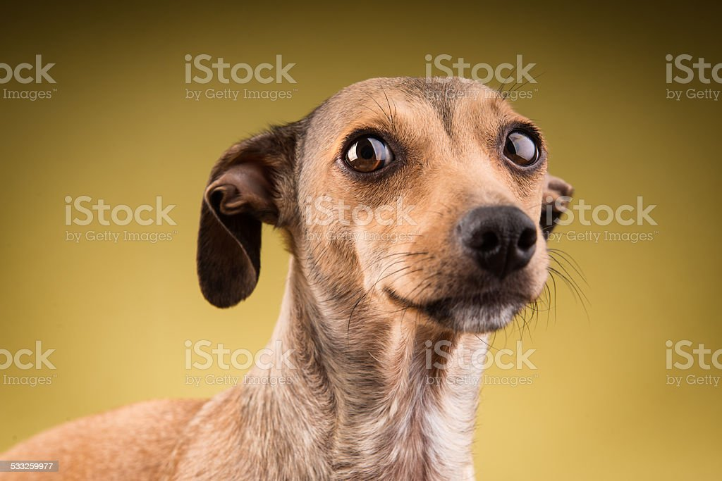 Close-up portrait of the dog face stock photo