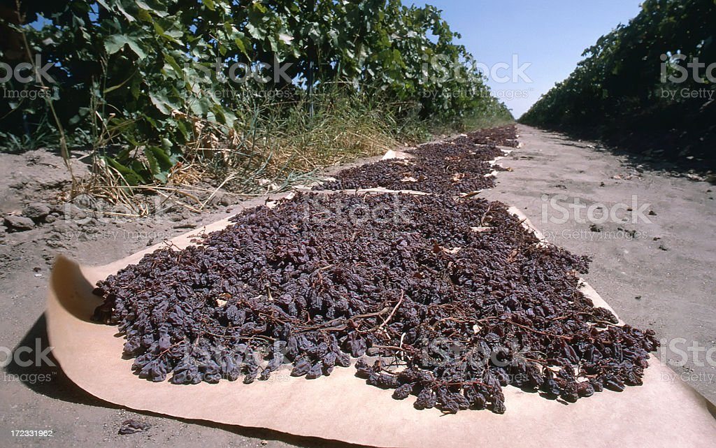Close-up Raisins Drying stock photo