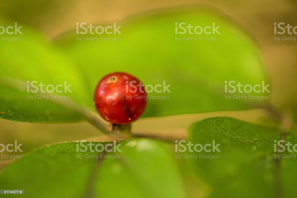 Closeup Red Berry With Green Leaves stock photo