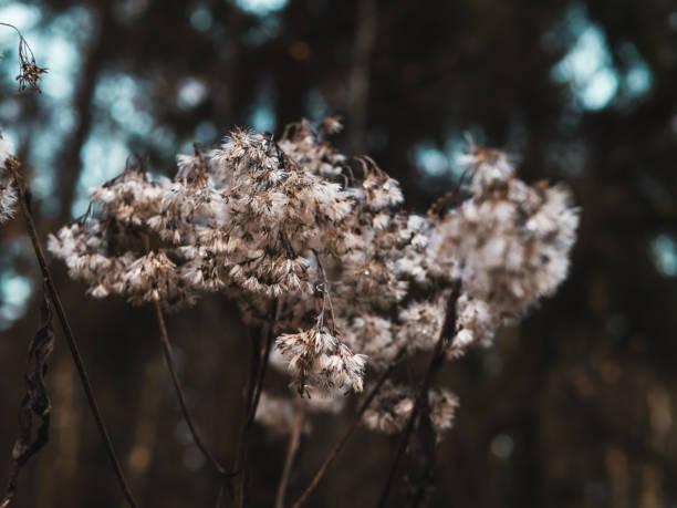 Nahaufnahme von einer Weide im Wald – Foto