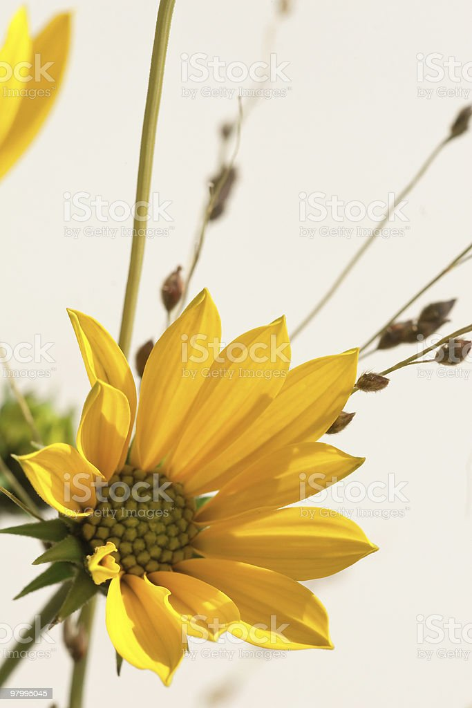 Closeup shot of a yellow flower royalty-free stock photo