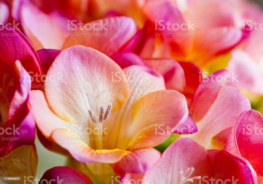 Close-up shot of an open flower within a bouquet圖像檔