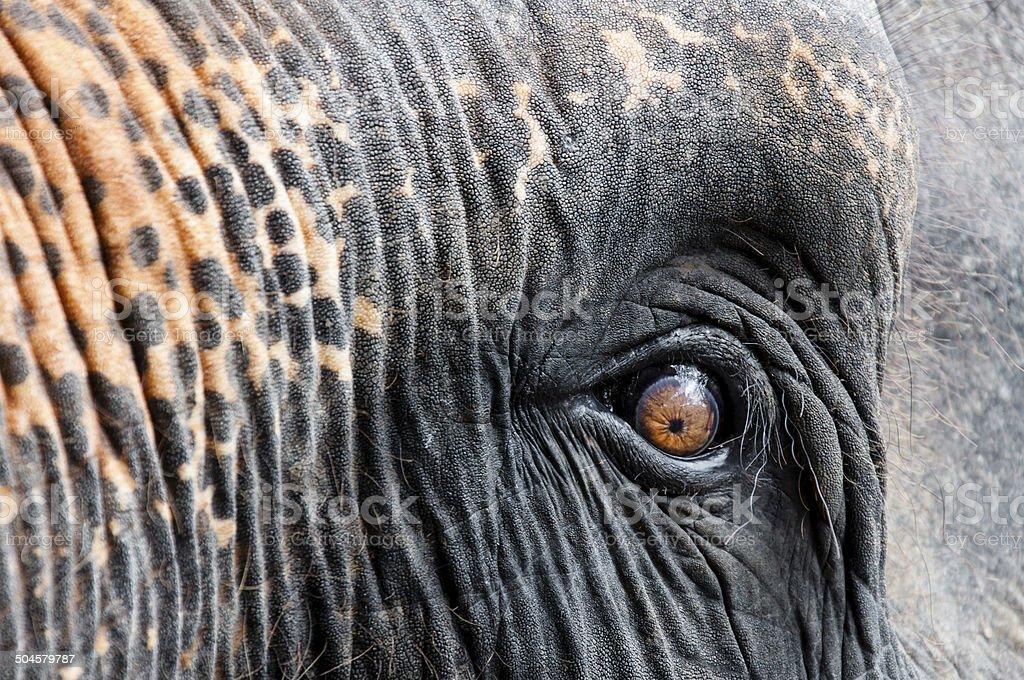 Close-up shot of Asian elephant eye royalty-free stock photo