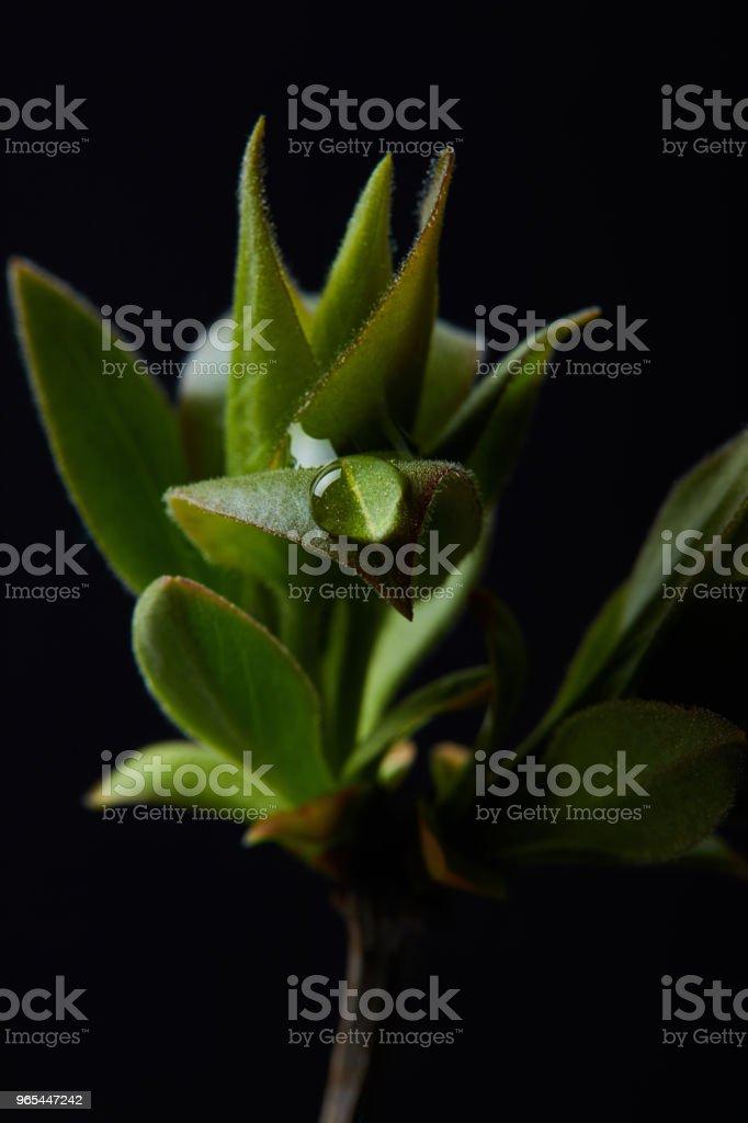 물과 식물의 분 지의 근접 촬영 샷 드롭에 고립 된 검정색 배경 - 로열티 프리 0명 스톡 사진