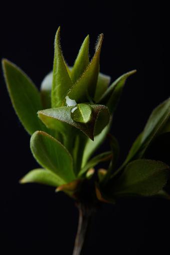 물과 식물의 분 지의 근접 촬영 샷 드롭에 고립 된 검정색 배경 0명에 대한 스톡 사진 및 기타 이미지