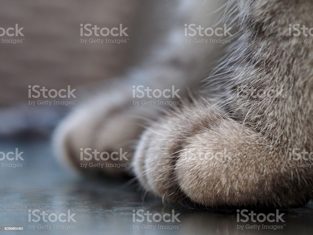 close-up shot of cat paw stock photo