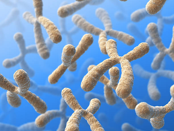 A close-up shot of chromosomes in a blue background stock photo