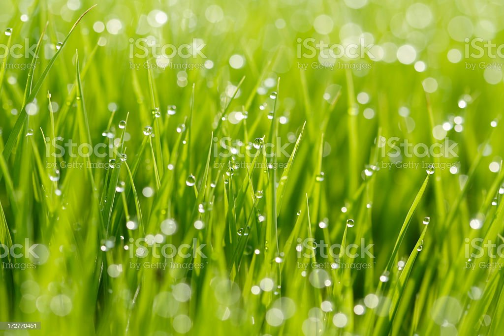 Close-up shot of grass with water drops royalty-free stock photo