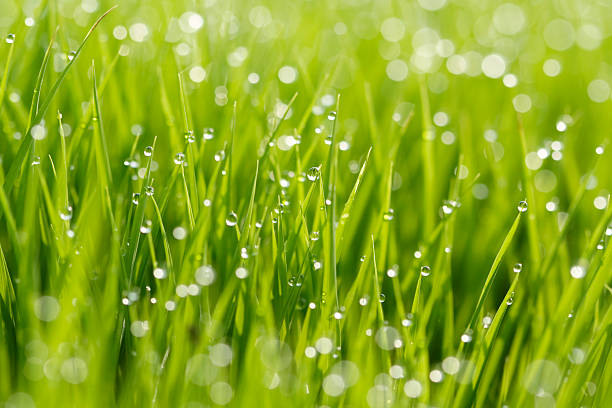 Close-up shot of grass with water drops stock photo