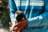 Closeup shot of hand holding a small puppy