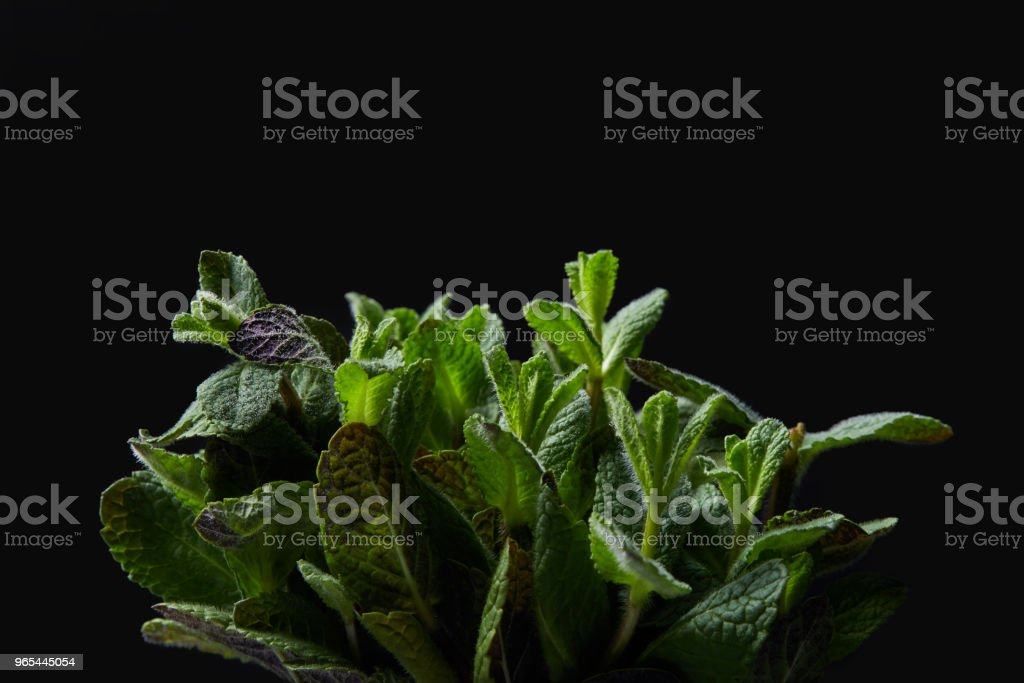 closeup shot of mint leaves isolated on black background royalty-free stock photo