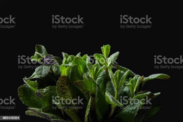 Foto de Closeup Tiro De Hortelã Folhas Isoladas No Fundo Preto e mais fotos de stock de Botânica - Assunto