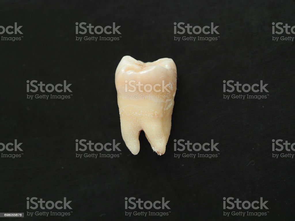 Closeup single real tooth on black background. healthy teeth. stock photo