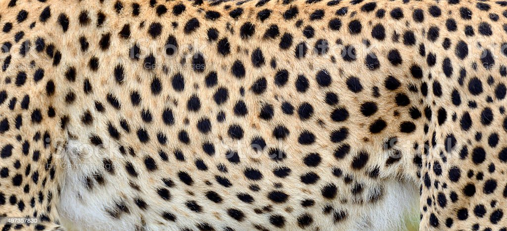 Close-up skin of a cheetah stock photo