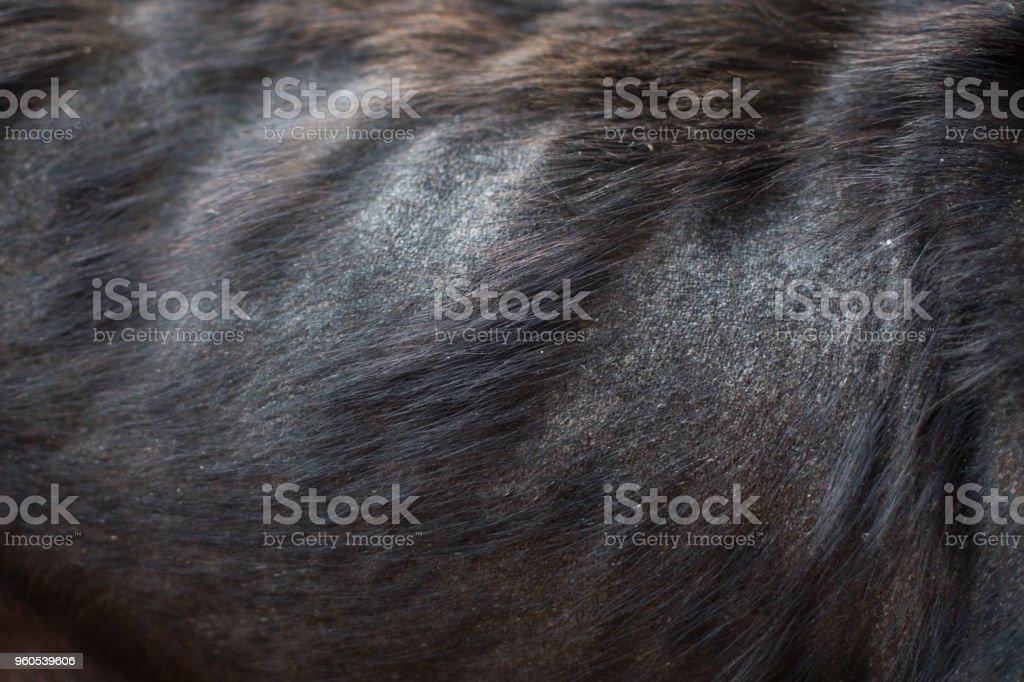 Close-up skin of back dog is leprous stock photo