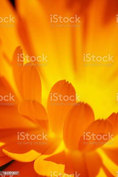 Closeup Soft Focus Flower Stock Photo - Download Image Now