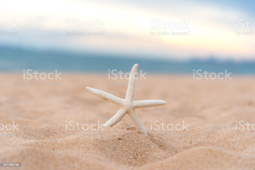 Closeup starfish in the sunset on the beach.  Summer Concept stock photo