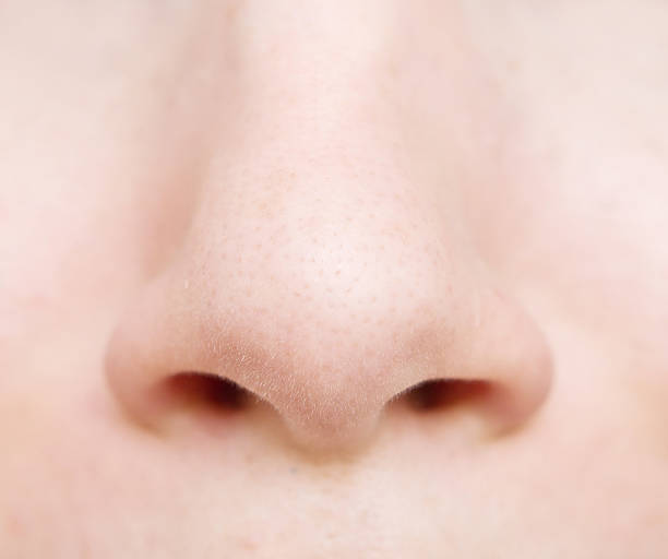 Close-up still life of woman's nose stock photo