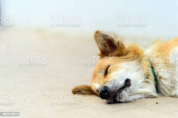 Zbliżenie Bezpańskich Psów Śpiących Na Ulicy Z Miękkim Ostrościem I Światłem W Tle - zdjęcia stockowe i więcej obrazów Bezpańskie zwierzę
