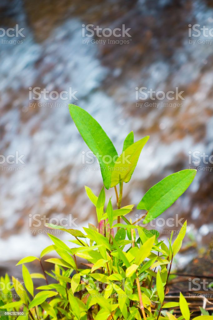 close-up stream flows down royalty-free stock photo