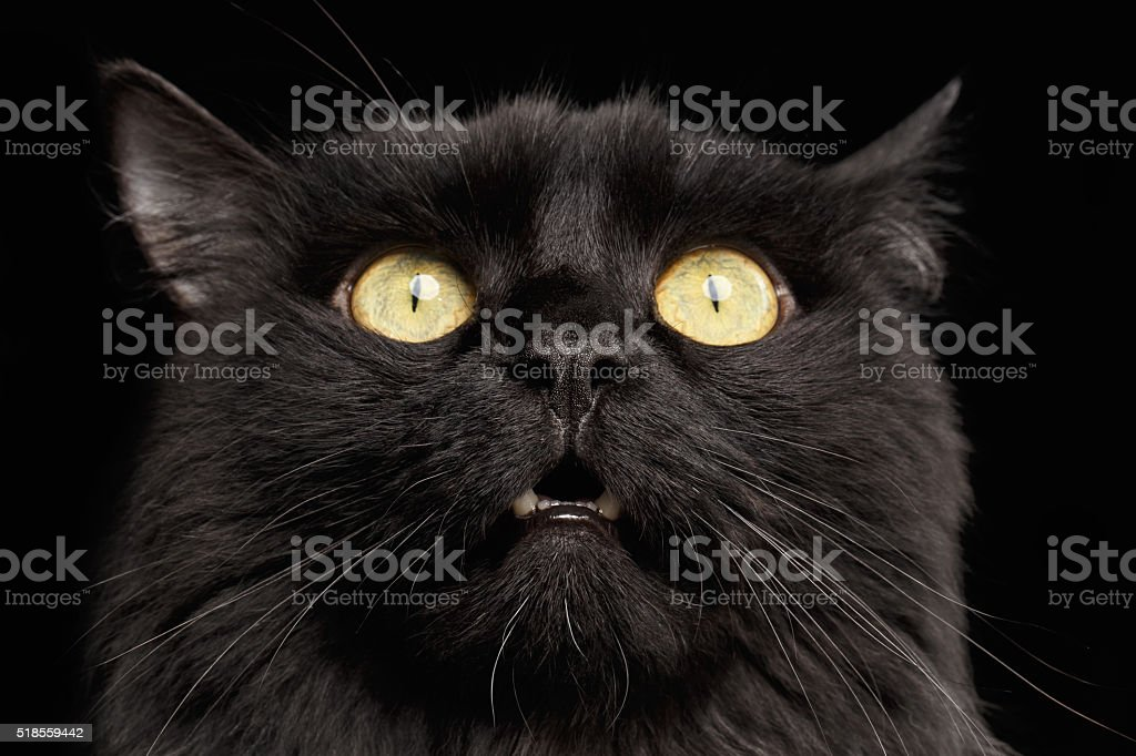 Closeup Surprised Black Cat Face with Yellow Eyes opening Mouth stock photo