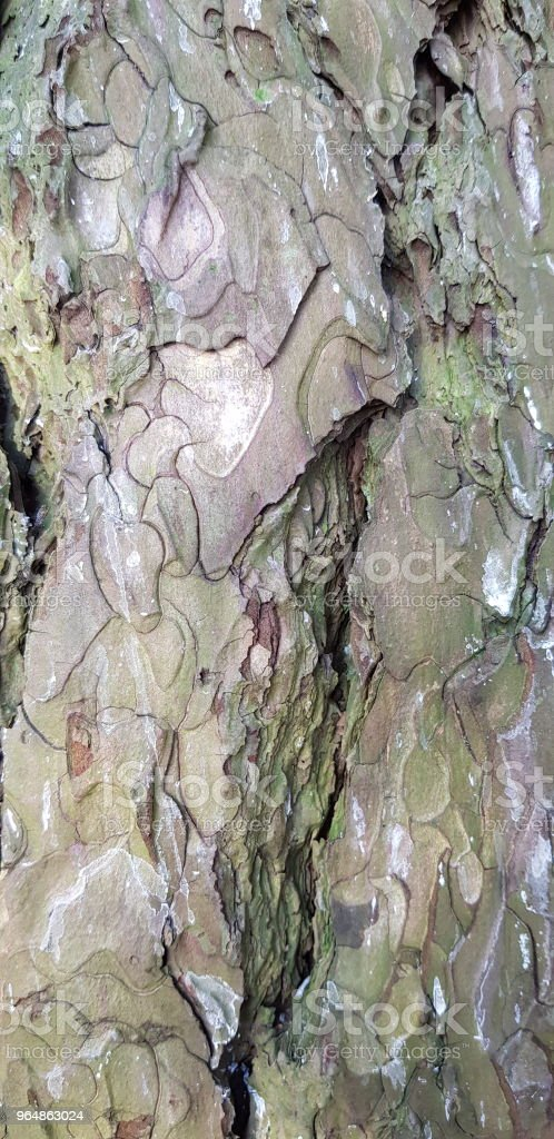 Closeup texture of bark of old tree. Grungy and rough wooden natural background. royalty-free stock photo