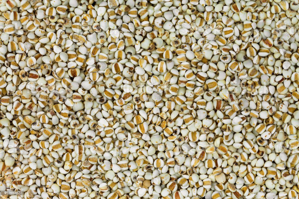 Closeup texture of dried Chinese pearl barley, Job's tears grains, known as Adlay millet stock photo
