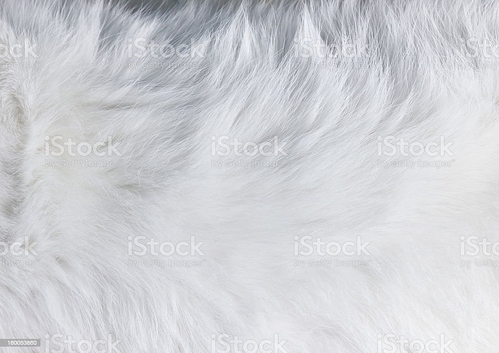 Closeup texture of white cat fur stock photo