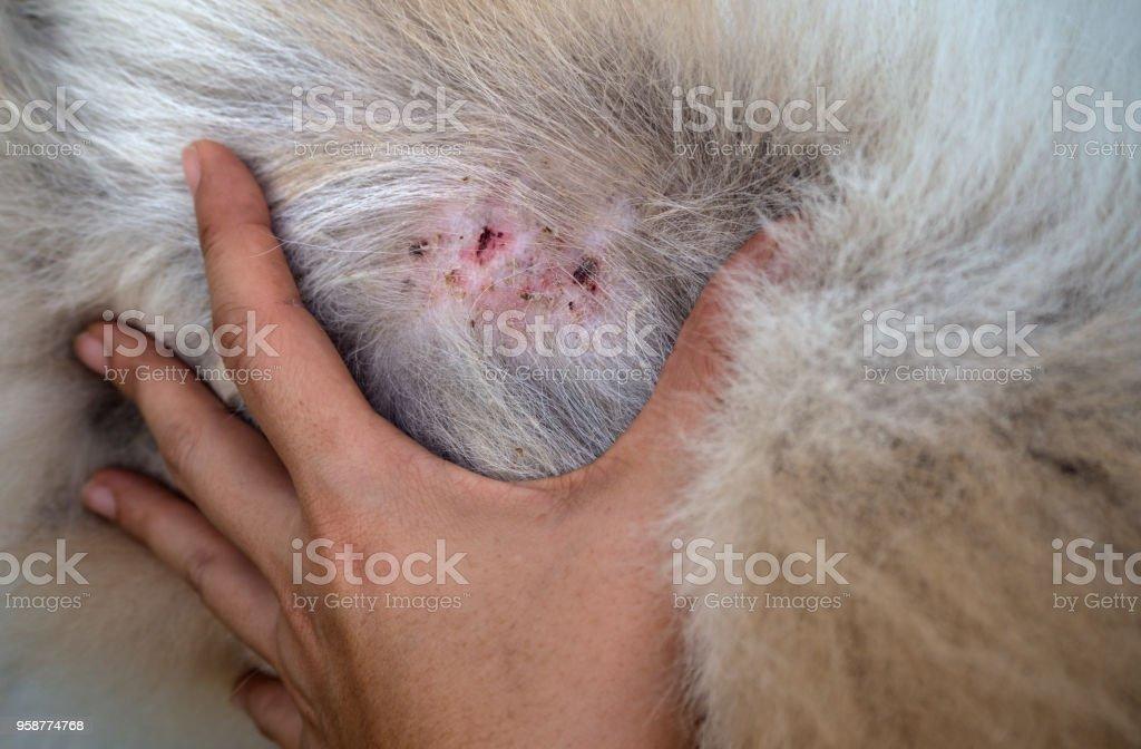enfermedades de la piel de los animales