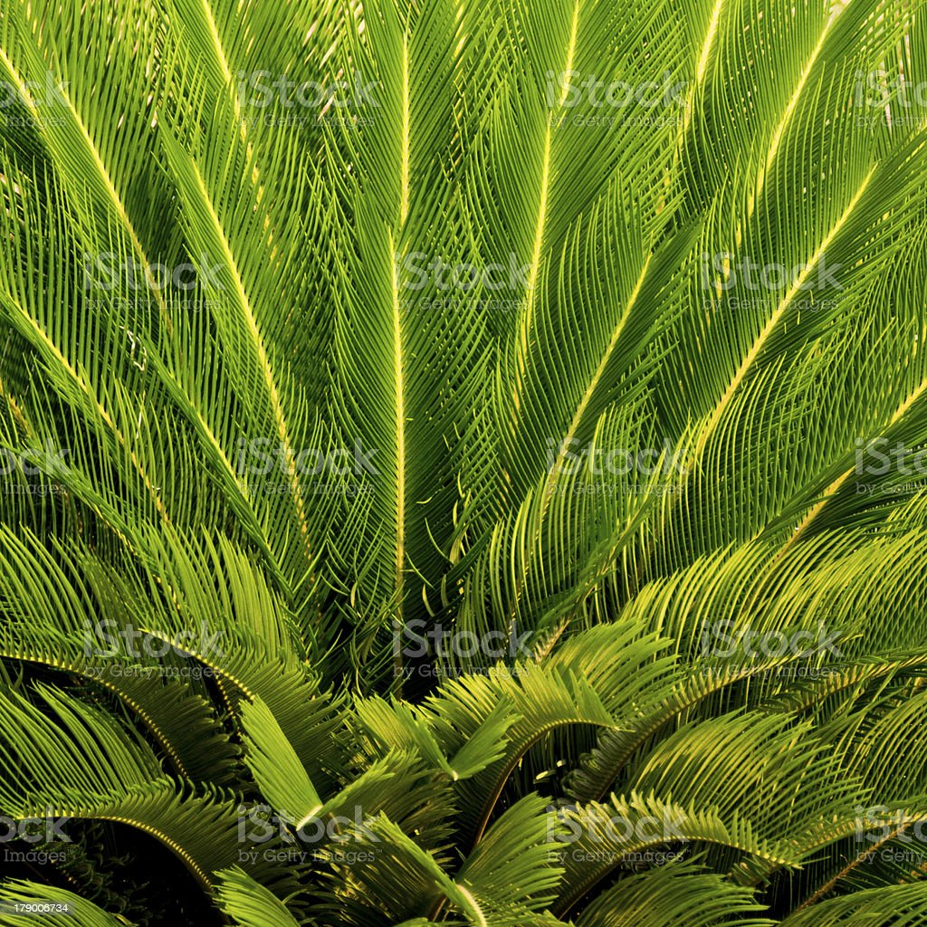 Close-up the top of a palm tree royalty-free stock photo